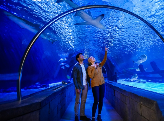 couple at an aquarium